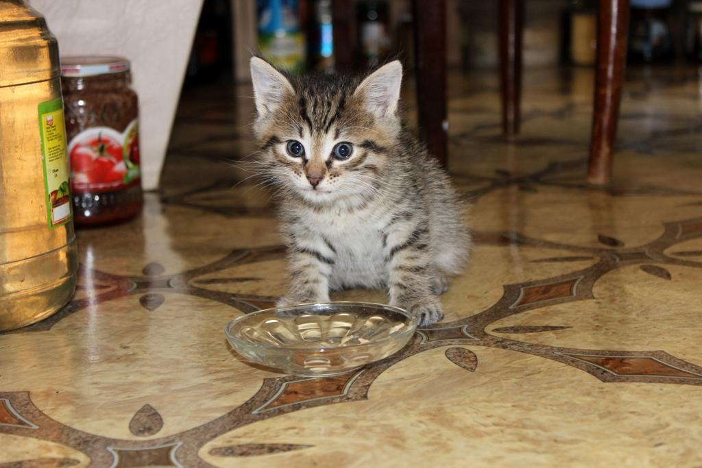 Первая миска котенка Барсика