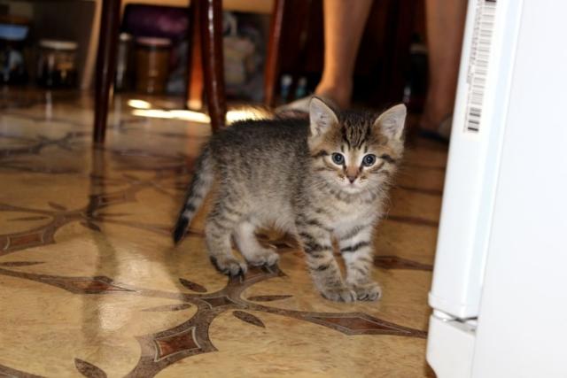 Реакция котенка Барсика на фотокамеру