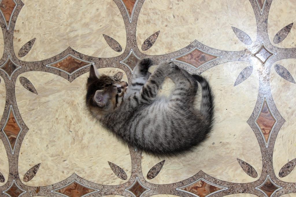 Хорошо лежать на полу