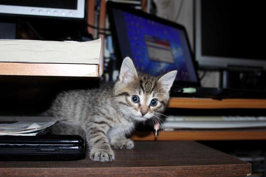 Полазаю-ка я около компьютера.