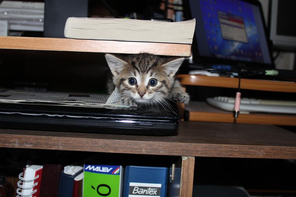 Около компьютера можно и спрятаться.