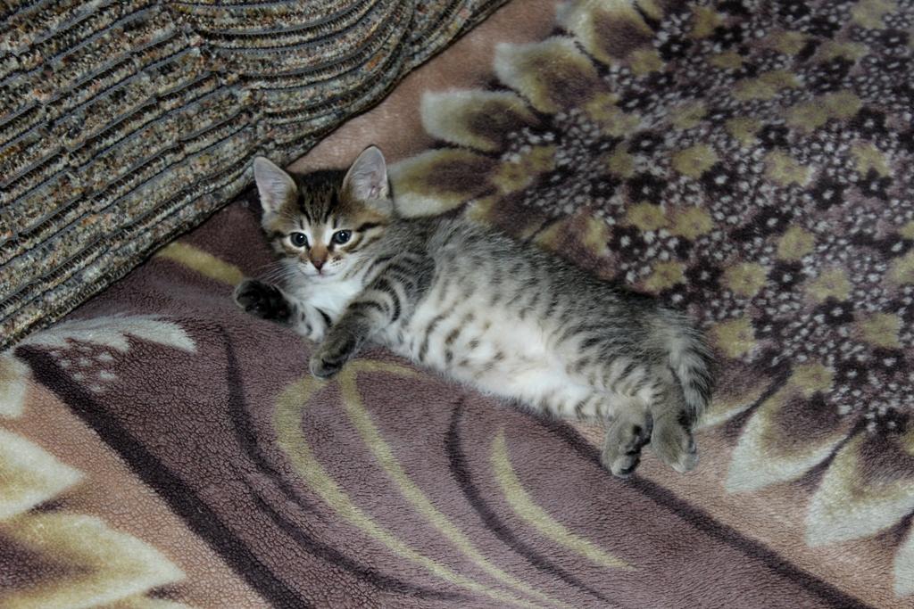 Лежать на диване- одно удовольствие
