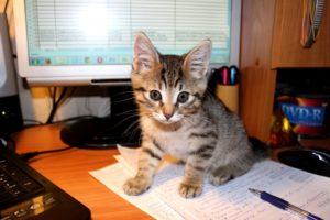 котенок в 3 месяца