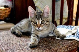 котенку 4 месяца
