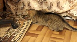 кот и коврик