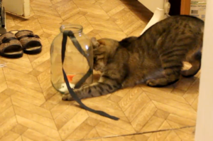 кот с банкой