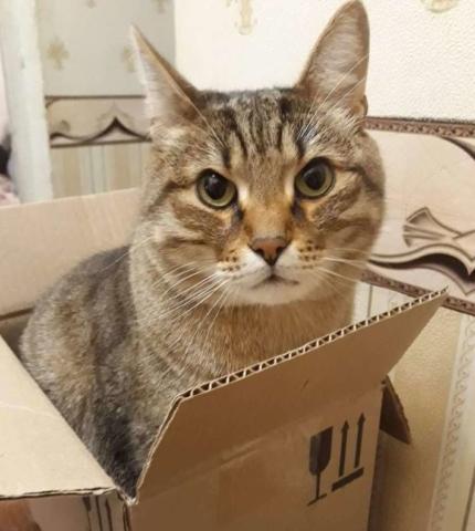 Любовь к коробкам