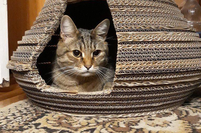 Домик для кота Барсика